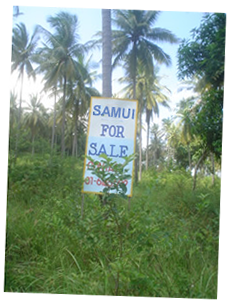Samui Land For Sale Sign